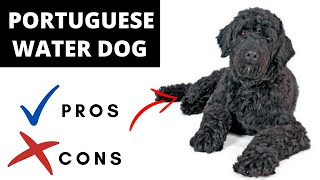 Portuguese Water Dog Pros And Cons | The Good AND The Bad!!