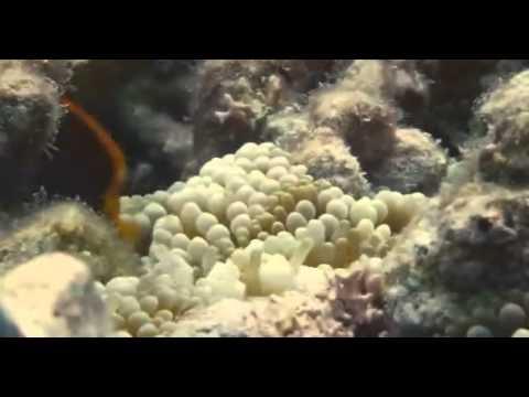 Disney Nature Oceanos Dublado