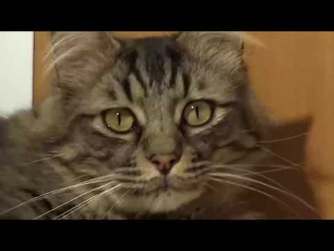 SteamBro: New Videos - Full (2016-07-20 #042409) |