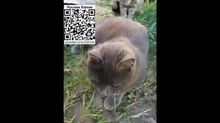 кошка ест мышь