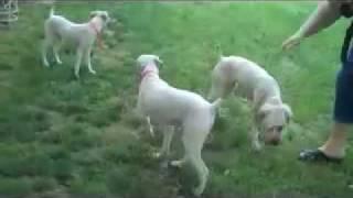Baixar Kelly, Kramer, Reecy and Shelby enjoy the yard