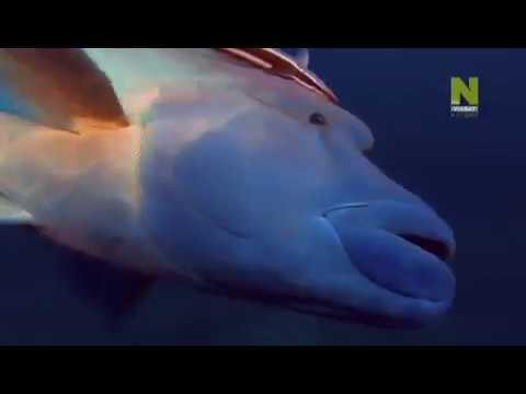 Глубины океана , Документальный фильм !!!