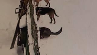 Собаки  иные, чем прошлогодние, которых отравили летом кто-то. 13. 12. 2018