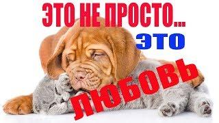 Приколы с животными..Смешное и романтичное видео о собаке и коте....:)