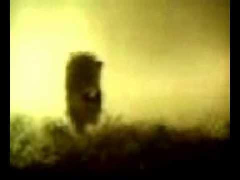 ёжик в тумане прикол - hd, в хорошем качестве, видеобокс
