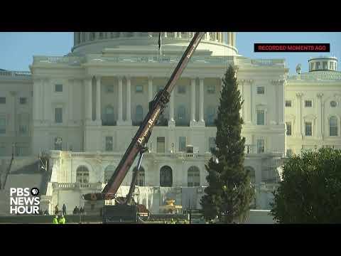 WATCH: 2019 U.S. Capitol Christmas Tree Arrives