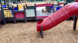 Pitbull Running Through Playground!