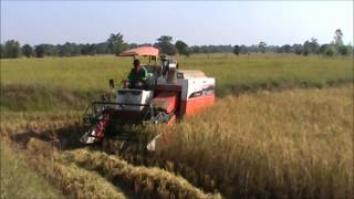 Cutting Rice with the Kubota DC 68G in Rural Thailand