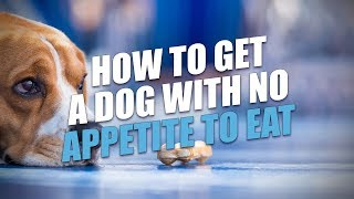 How to Get A Dog With No Appetite to Eat (A Simple Solution)