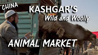 The Real Life Arabian Nights! The Silk Road Animal Market