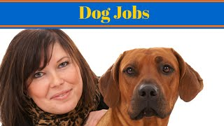 Dog Jobs - Working With Animals