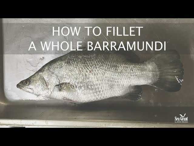 How to Fillet a Whole Barramundi