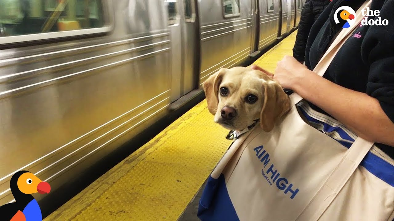 NYC Subway Dogs Brighten People's Days