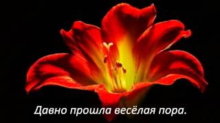 Друзьям с любовью цветы и красивая музыка для души!