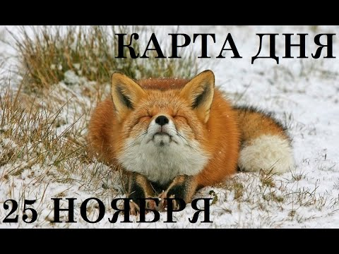 КАРТА ДНЯ 25 НОЯБРЯ ТАРО ГОРОСКОП