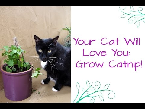 How To Grow Catnip: Your Cat Will Love You!
