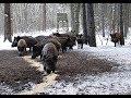 Уроки охоты на кабана зимой с вышки! Как охотиться на кабана с вышки?