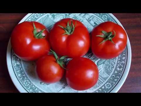 Сорт томата Сверхранний - (укр. Найранніший )