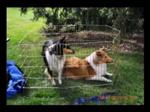 Collie Rescue Slideshow