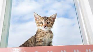 Webinar 3: Keeping Kittens Healthy