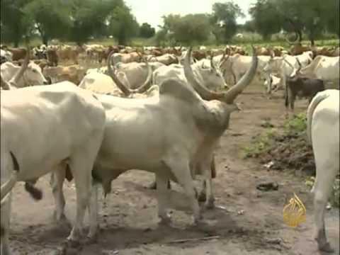 أهمية الأبقار عند قبائل جنوب السودان thumbnail