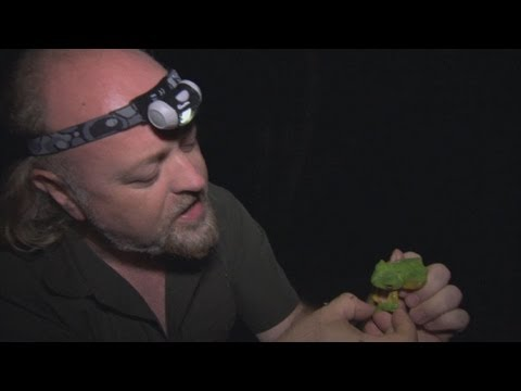 Wallace's Flying Frog - Bill Bailey's Jungle Hero - Episode 1 - BBC Two