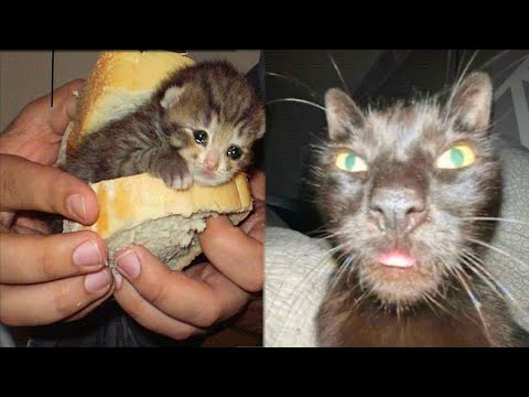 BEST CAT MEMES COMPILATION OF 2020 PART 28 (FUNNY CATS)