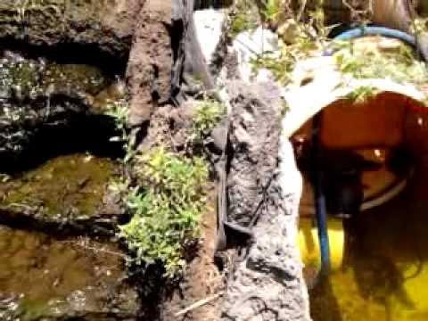 como mantener limpia el agua de su estanque youtube