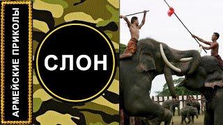 АРМЕЙСКИЕ ПРИКОЛЫ: Слон