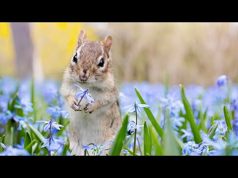 Relax Your Pet | Chipmunks For Cats and Dogs | 10 Hour Entertainment Video | Leave On All Day