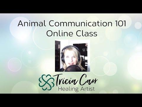 Animal Communication 101 - Animal Telepathy