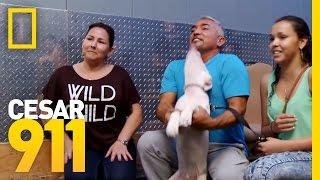Cesar Millan: Viva Las Vegas Live Trailer