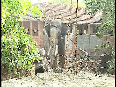 Mad Elephant Attack in Kerala 2015 | Indian Shocking ...
