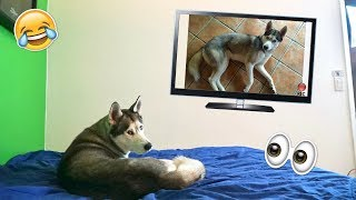 Husky Reacts to Himself Being on TV! - Gohan's on TV!