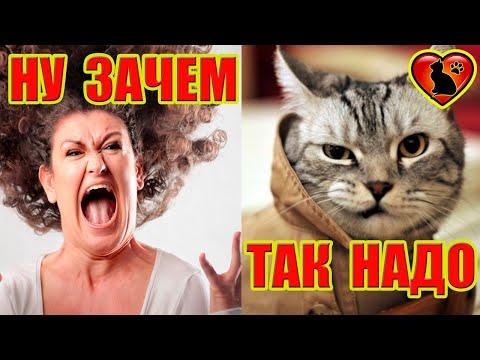 Вот почему кошки дерут обои и диван!  Как отучить кошку драть обои!