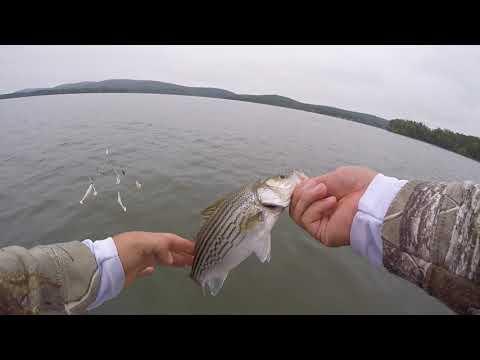 Striper Fishing At High Rock Lake
