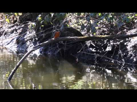 Wildlife for fun ,is a collection of Wildlife filmed in West wales