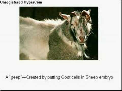 Aninimal Book: Genetically Modified Animals - YouTube