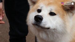 выставка собак Астана.