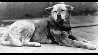 История о собаке Хатико (субтитры)
