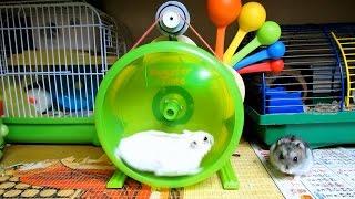 ЖИЗНЬ ХОМЯКОВ | Hamster Time
