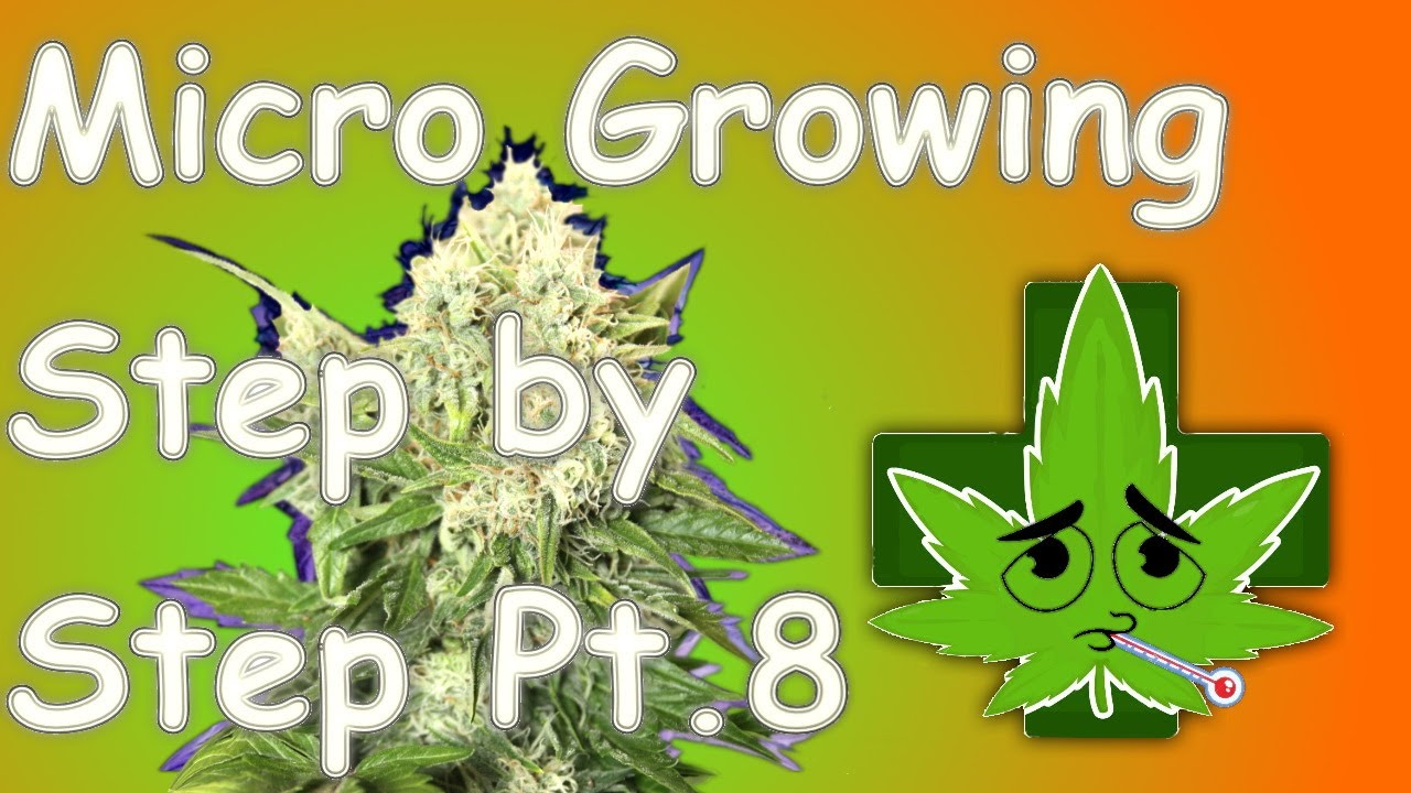 Micro Growing Step by Step Part 8 - Problems Big and Small