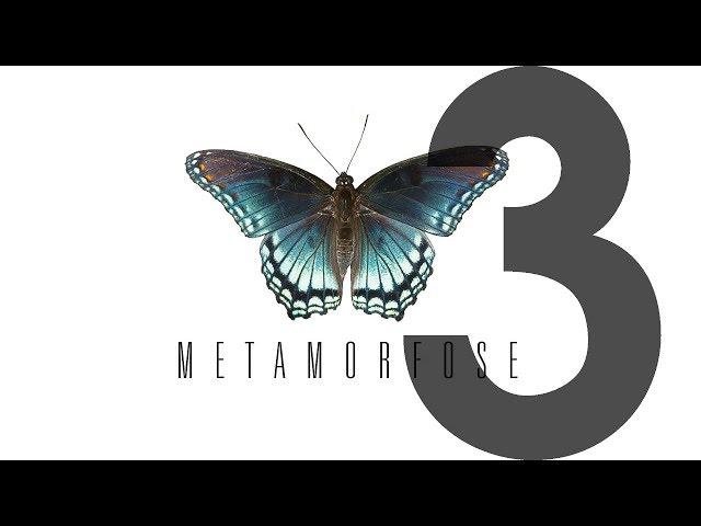 METAMORFOSE - 3 de 4 - Desafios