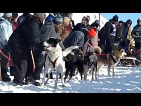 Hilarious dog talking at the start of dog sled race