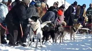 Repeat youtube video Hilarious dog talking at the start of dog sled race