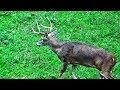 Whitetail Buck Hunting The Rut 2018 Pa Bowhunting Archery Deer Season - John's Rut Report