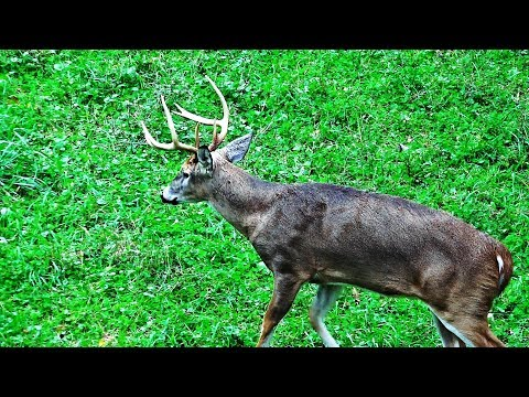 Whitetail Buck Hunting The Rut 2018 Pa Bowhunting Archery Deer Season - John's Rut Report