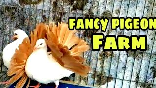 Largest fancy pigeon farm At Kolkata | Part 2 | fancy pigeon collection