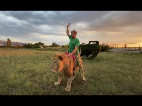 Я не разрешаю льву Чуку забирать мясо у Султана !