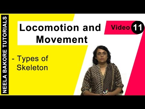 Locomotion And Movement - Types Of Skeleton